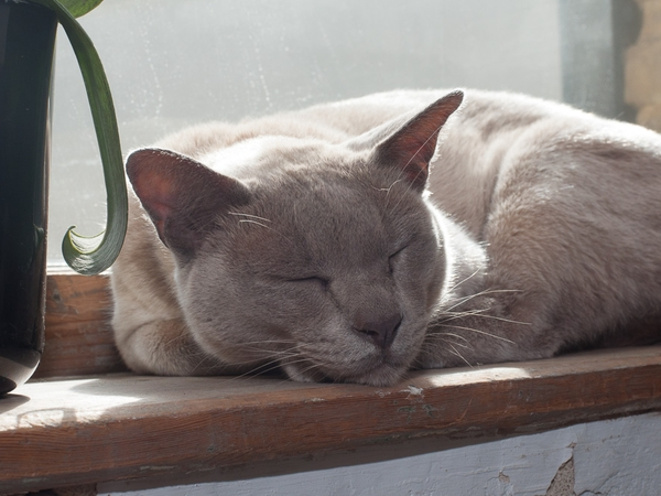 Central Penzance cat/house sitter needed