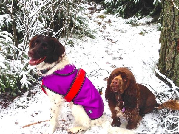Dog & Homesitter for 2 Pups in Lovely Denmark