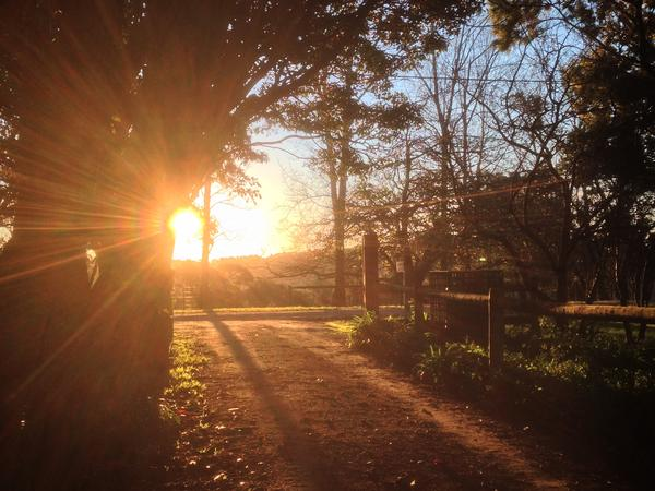 Cat/House Sitter Needed in Red Hill VIC