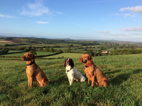 Housesitting assignment in Haselbury Plucknett, United Kingdom