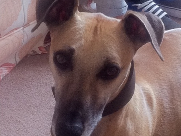 House/pet sitter needed for low-ceilinged thatched cottage and a lovely whippet and Labrador