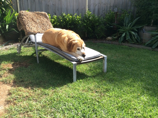 Housesitting assignment in Anglesea, VIC, Australia