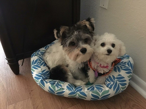Pet Sitter needed for 3 little doggies.