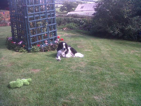 Alfie's needs a loving sitter.