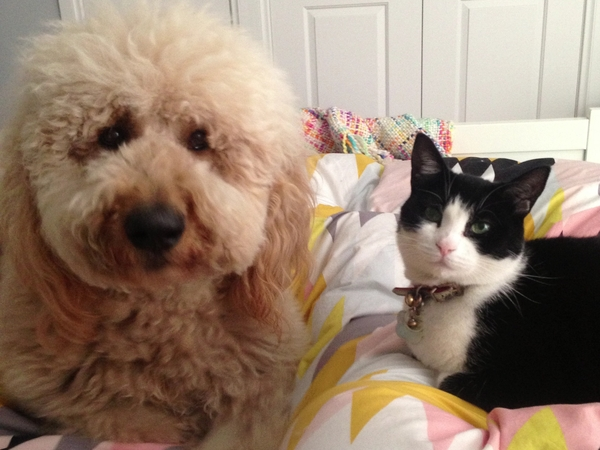 Cat & large dog sitter.