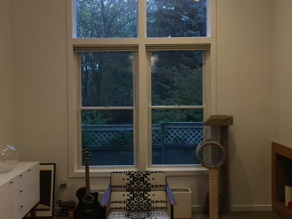 House/Pet sitting in Cambridge townhouse (Porter Square) that is home to 2 cats.