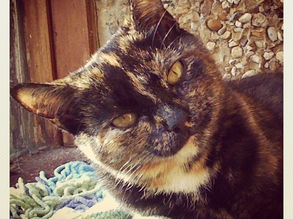House sitter for our two cats and fish near shepton mallet