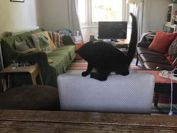 Pet sitter in December