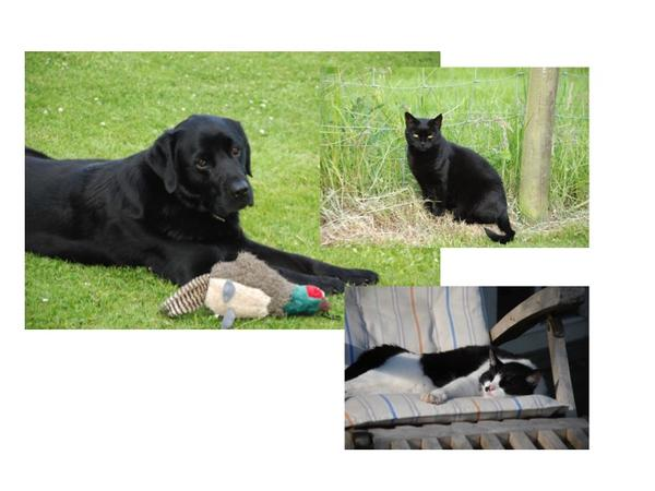 Sitters sought for 19 July to 5 August 2016 One lovable back lab and 2 friendly cats