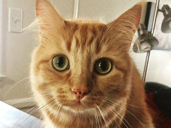 House and pet sitter needed for two cats in Santa Monica
