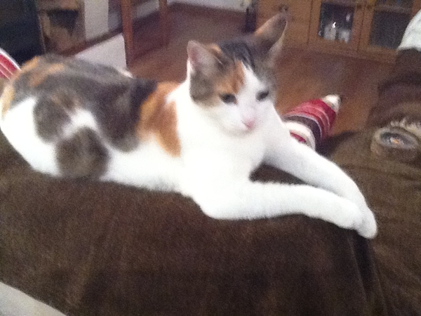 Pet sitter needed for 2 young cats in rural France