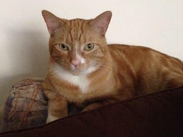 Cat/House Sitter