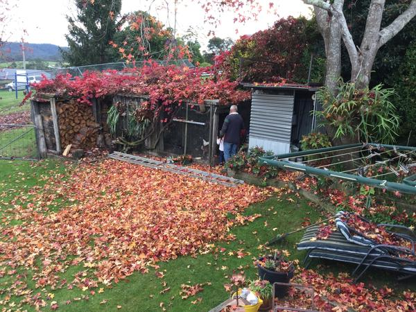 Housesitting assignment in Bruthen, VIC, Australia