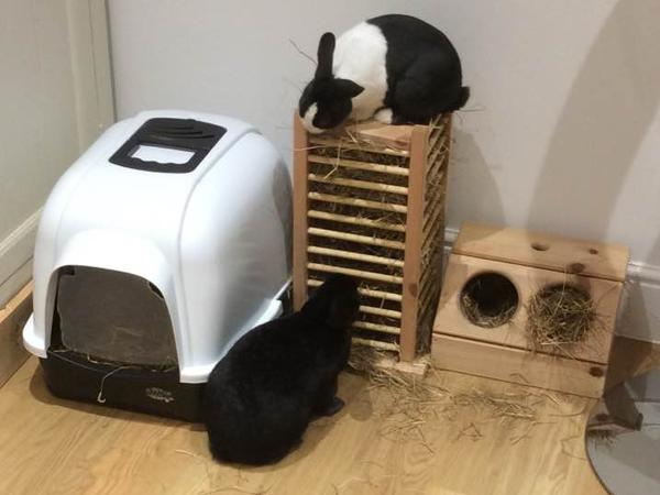 Rabbit and hamster care needed