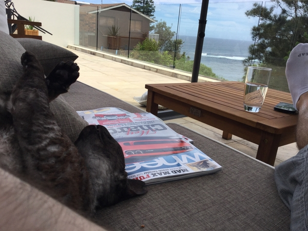 Housesitting assignment in Clovelly, NSW, Australia