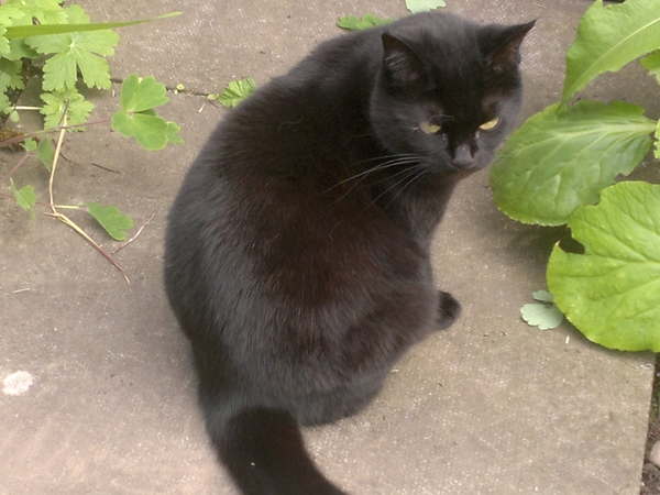 Cat Sitters required 14-18th November 2014