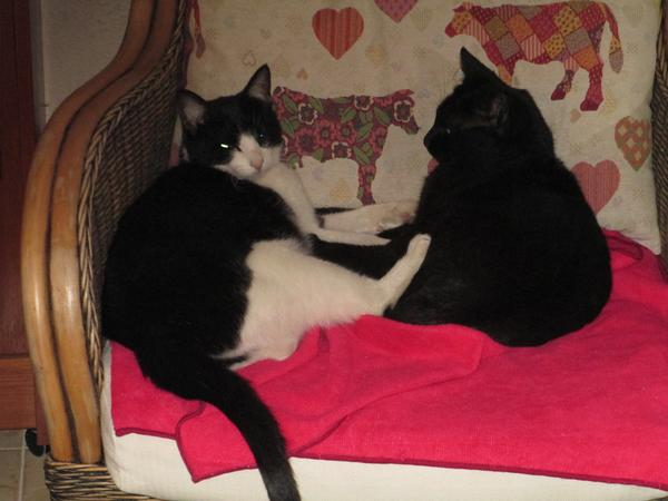 Costa Blanca Finca plus kitties needs TLC during holiday