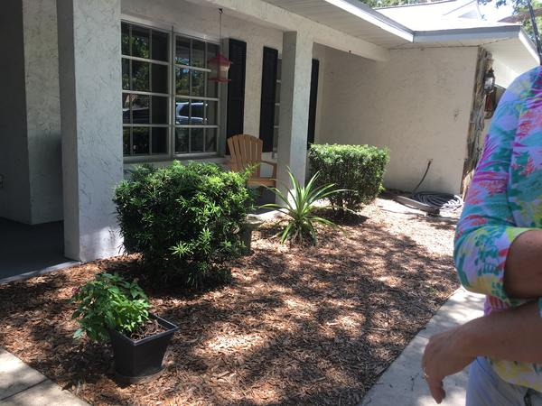 Housesitting assignment in Sarasota, Florida, United States