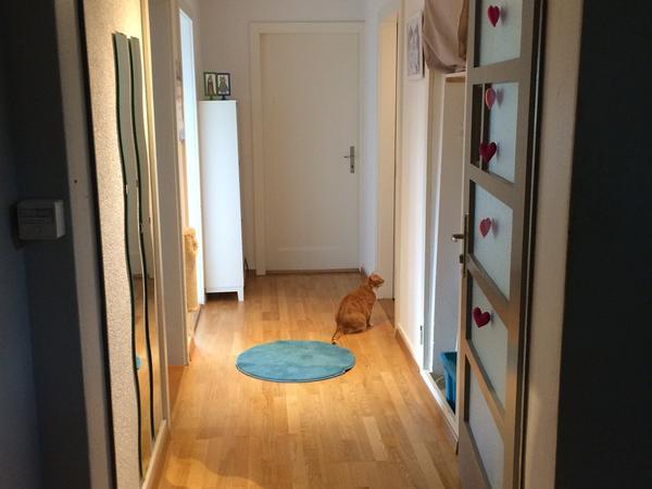 Housesitting assignment in Zürich, Switzerland