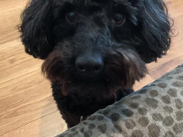 Housesitting assignment in Notting Hill Gate, United Kingdom