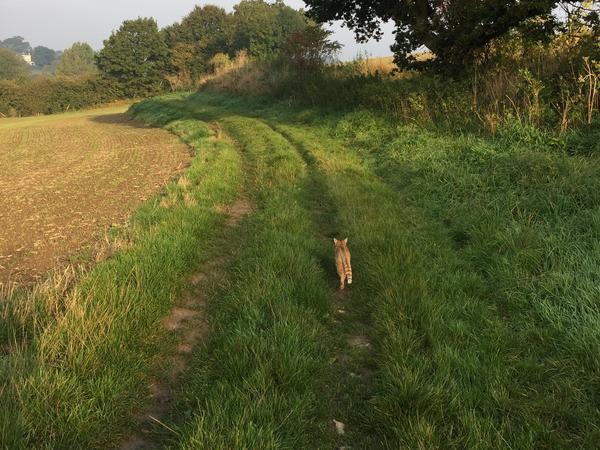 Spend 1 week in 40 acres of Kent countryside with a Frenchie