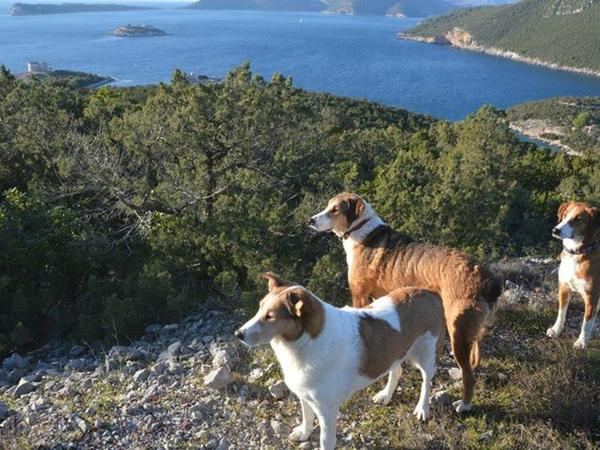 urgently needed - couple to stay in our house in montenegro to sit for our 7 dogs and 2 cats