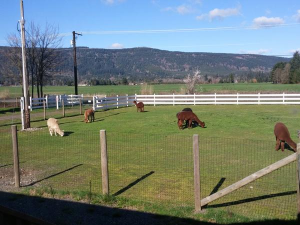 Housesitting assignment in Rochester, WA, United States