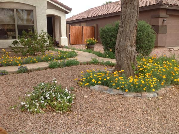 Housesitting assignment in Mesa, AZ, United States