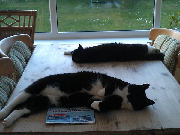 Come and explore beautiful North Suffolk and look after our two friendly cats.