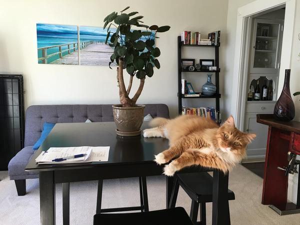 Housesitter Needed for SF Apt with Gentle, Cuddly Cat (November 21st - November 27th)