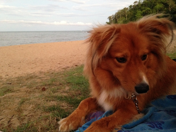 Pet sitter needed for our dog Timmy for 5 weeks in Trinity Beach