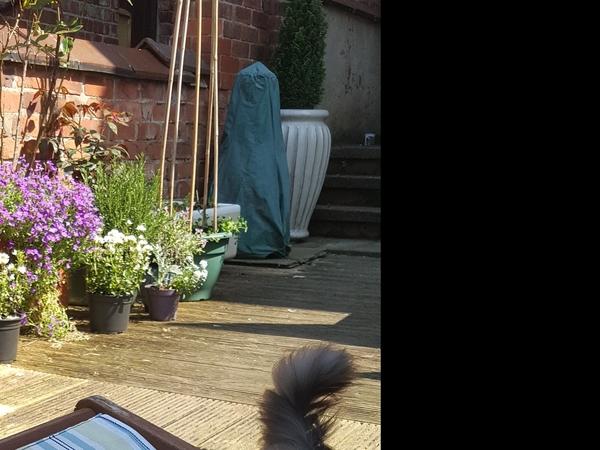 Housesitting assignment in Flixton, United Kingdom