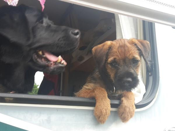 experienced pet sitters to keep our pets happy when we are away