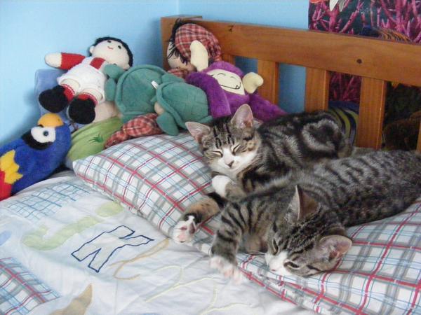 Cat sitter found