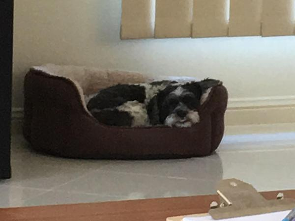 Housesitting assignment in Green Point, New South Wales, Australia