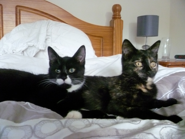 Cat sitter for Monty, Charlie, Max and Tahlia July 27th - Aug 3rd 2014