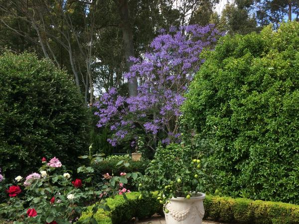 Housesitting assignment in Cambewarra, New South Wales, Australia