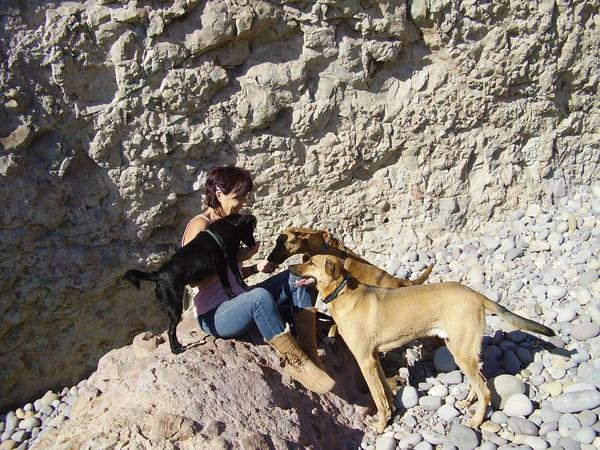 Pet and house sitter needed for July and August 2015 in southern Spain