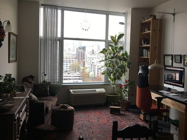 Kitty and Plant sitter in my NW Pearl District apartment
