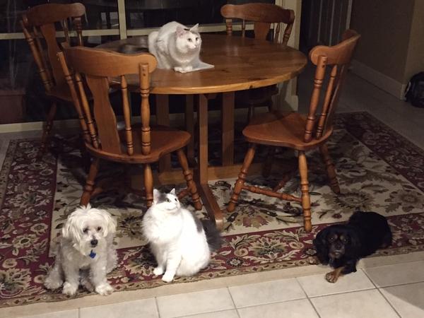 Pet sitter needed in Glenelg South