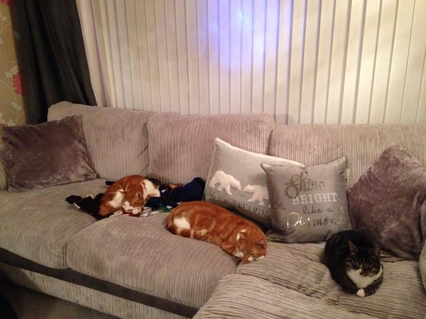 Pet/House Sitter for 2 friendly cats