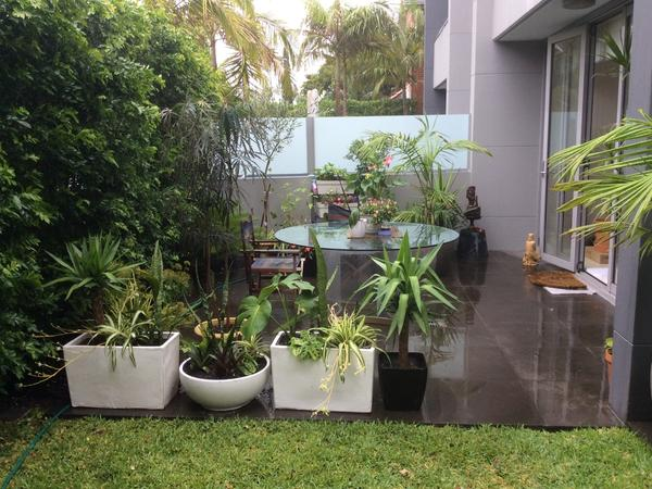 Housesitting assignment in Rose Bay, New South Wales, Australia