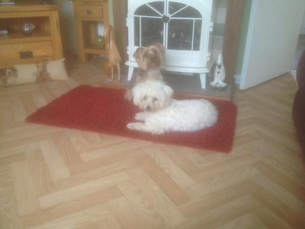 Housesitting assignment in Bicker, United Kingdom