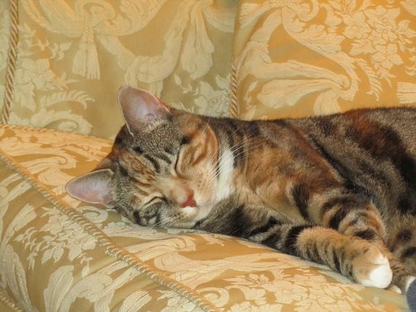 Cat/house sitter needed August/September 2017