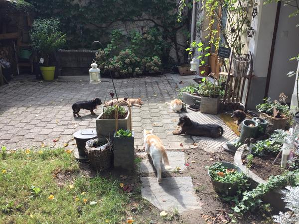 Housesitting assignment in Aubonne, Switzerland