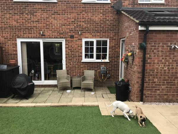 Cosy home with 3 loveable dogs and 2 cats need caring sitter