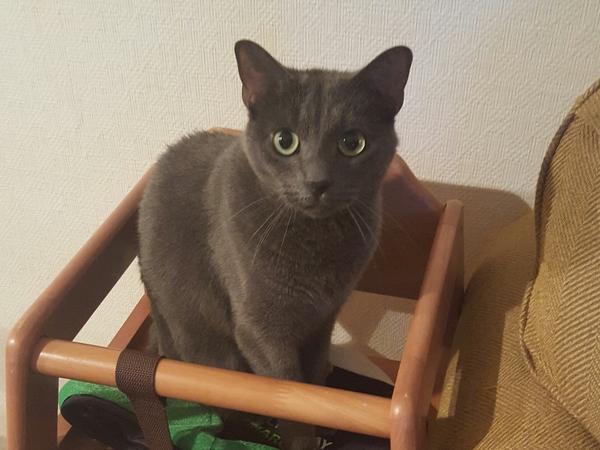 You're my boy Blu!!  (I really love my cat, Blu)