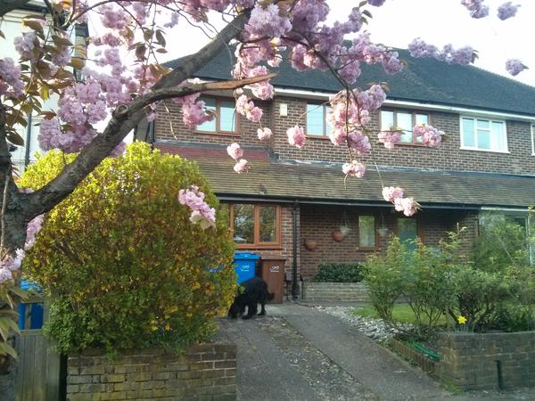 Housesitter needed for 3- 7 September and 20- 29 September 2017 (not necessarily same person) Dulwich, London