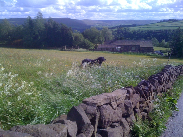 Dog sitter/s needed from 1st to 9th Sept 2012 in Hebden Bridge.