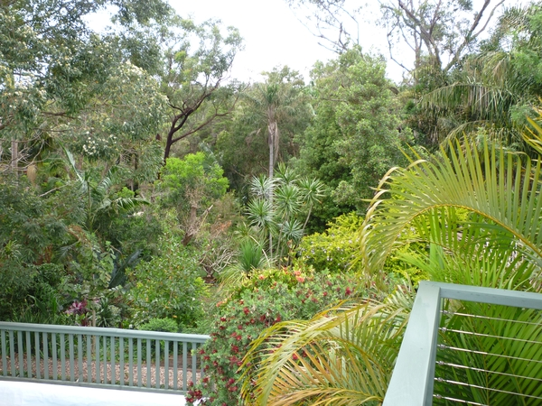 Dog & House sitter required in Port Macquarie Australia